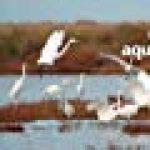 100 oiseaux de l'hiver de la marque Frederic Jiguet image 3 produit