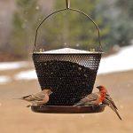 abreuvoir à oiseaux jardin TOP 0 image 4 produit
