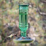 ABREUVOIR pour 8108–2Vert antique Bouteille 283,5gram en verre Hummingbird Feeder de la marque Perky Pet image 4 produit