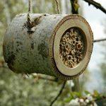 abri abeille solitaire TOP 6 image 2 produit
