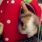 Abri et panier pour petit animal de compagnie - Lapin, cochon d'Inde, hamster, hérisson, chinchilla, etc. de la marque FLAdorepet image 5 produit