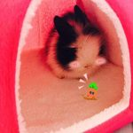 Abri et panier pour petit animal de compagnie - Lapin, cochon d'Inde, hamster, hérisson, chinchilla, etc. de la marque FLAdorepet image 4 produit