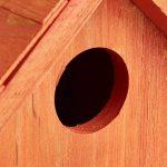 abri oiseau en bois TOP 9 image 4 produit