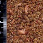 Alimentation Grive - Pâtée Oiseaux FruttaPiu Insetti 3KG de la marque Re Del Canto image 1 produit