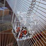 Bird Graines de nourriture Parrots Boule Box Intelligence jouet pour perroquet perruche perruche Amazones Calopsittes Inséparable Finch Canaries Cage Mangeoire à suspendre Cage balançoire à mâcher de la marque Hinmay image 4 produit