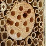 boîte à insectes en bois TOP 3 image 4 produit