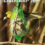 boule de suif pour oiseaux TOP 0 image 4 produit