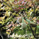 cacahuètes pour oiseaux jardin TOP 4 image 4 produit