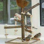 coco oiseau TOP 6 image 2 produit