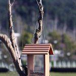 colibri mangeoire TOP 14 image 4 produit
