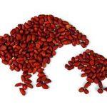 écureuil cacahuète TOP 5 image 3 produit