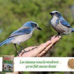 distributeur de graines pour oiseaux de la nature TOP 2 image 3 produit