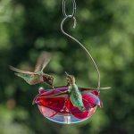 Droll Yankees rs-3hc Capacité à suspendre Motif colibri Nectar Mangeoire pour oiseaux 5 oz. Ruby/Clear de la marque Droll Yankees image 1 produit
