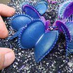 Egrow 100 PCS Jardin En Pot Bleu Insectivore Graines Rare Dionaea Muscipula Flytrap Bonsaï de la marque image 2 produit