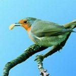 Erdtmanns Cacahuète pour Oiseaux 1 Kg de la marque Erdtmanns image 2 produit