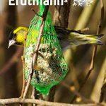 Erdtmanns Seau Boules de Graisse pour Oiseaux 35 Pièces de la marque Erdtmanns image 4 produit
