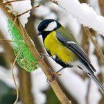 Erdtmanns Seau Boules de Graisse pour Oiseaux 35 Pièces de la marque Erdtmanns image 3 produit