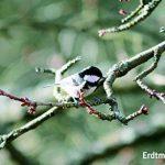 Erdtmanns Snackbar Mangeoire à oiseaux de la marque Erdtmanns image 1 produit