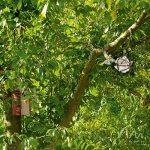 Gardigo Ouate pour nid d'oiseaux Pour la construction du nid et l'aménagement du nichoir Coton de la marque Gardigo image 2 produit