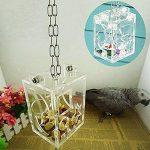graine de niger TOP 11 image 3 produit