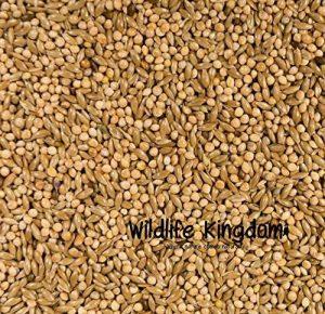 graines de millet pour oiseaux TOP 7 image 0 produit
