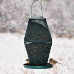 graines de tournesol noires pour oiseaux TOP 1 image 2 produit