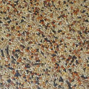 graines de tournesol noires pour oiseaux TOP 13 image 0 produit