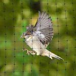 graines pour oiseaux des jardins TOP 1 image 4 produit