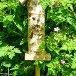 insecte dans maison TOP 0 image 3 produit