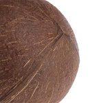 Lunji Naturel Coconut Shell Nid D'oiseau Maison Hut Cage Feeder Jouet Pour Pet Perroquet Perruche Perruche Cockatiel Conure de la marque Lunji image 4 produit