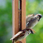 Luxus-Vogelhaus 46770e Mangeoire pour oiseaux en colonne avec réservoir résistant aux UV et câble de suspension en métal Bois de chêne massif de la marque Luxus-Vogelhaus image 4 produit
