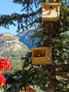 Mangeoire/Nichoir pour oiseaux en mélèze de la marque BABAZINOV image 0 produit