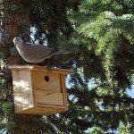 Mangeoire/Nichoir pour oiseaux en mélèze de la marque BABAZINOV image 4 produit