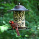 mangeoire oiseau anti ecureuil TOP 4 image 3 produit