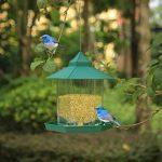 Mangeoire Oiseau PetsN'all - Mangeoire Oiseaux pour Extérieur à Suspendre à un Arbre de la marque PetsNall image 4 produit
