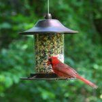 mangeoire à oiseau TOP 4 image 1 produit