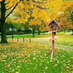 Mangeoire Pour Les Oiseaux De Plein Air Jardin Bois Massif Modèles De Plancher Feeder Parfait Pour Décoration De Jardin Et Observation Des Oiseaux Pour Amant D'oiseau. Cacoffay de la marque Ca.Coffay image 1 produit