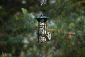 mangeoire pour oiseaux pas cher TOP 10 image 0 produit