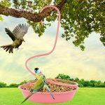 mangeoire pour pigeon TOP 5 image 3 produit