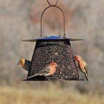 mangeoires oiseaux originales TOP 1 image 2 produit