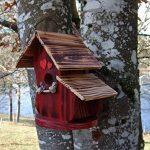 nichoir oiseau fait maison TOP 5 image 0 produit