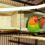 nid pour canaris cage TOP 1 image 3 produit
