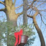 nourrir les écureuils TOP 3 image 4 produit
