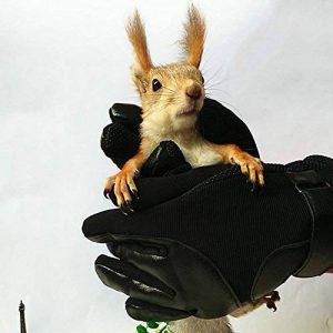 nourrir les écureuils TOP 4 image 0 produit