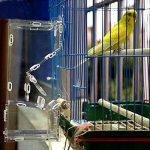 nourrir oiseaux été TOP 6 image 2 produit