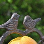 oiseaux de nos jardins en hiver TOP 6 image 3 produit