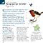 Oiseaux : guide tout reconnaître dans la nature de la marque Collectif image 1 produit