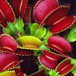 oiseaux insectivores jardin TOP 10 image 3 produit