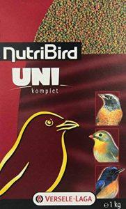 oiseaux insectivores TOP 1 image 0 produit