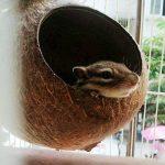 OMEM Maison du Hamster Bird Maison de noix de coco,noix de coco coquillages Peut fixe en bambou,cages à oiseaux,cages pour hamster(M) de la marque OMEM image 4 produit